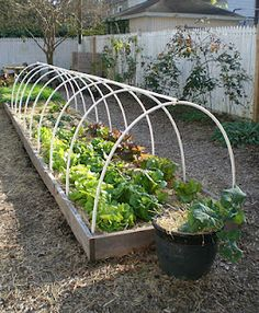 hoops over lettuce beds, so they can be covered in a frost
