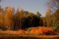 Autumn II by Watze D. de Haan