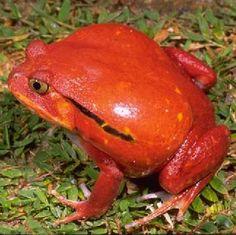 De meest kleurvolle kikkers ter wereld