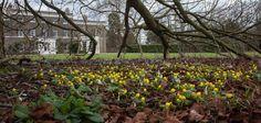 NGS Gardens open for charity - gardenWalkern, Stevenage, Hertfordshire SG2 7JA Opening dates and times  Sat 7, Sun 8 Feb (12-4.30); Sat 28 Mar; Sun 29 Mar (12-4.30)  Admission  Adm £3.50, chd free