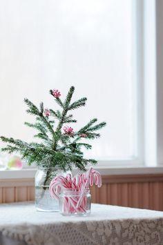 twistie tie poms on a little tree