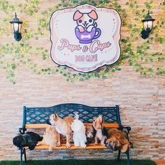 Pin for Later: 15 Ridiculously Awesome Animal Cafes That You Can Visit