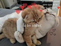 Cute Love Memes, Funny Love, Memes Amor, Memes Lindos, Love Phrases, Wholesome Memes, Love Messages, Funny Animal Pictures, Loving U