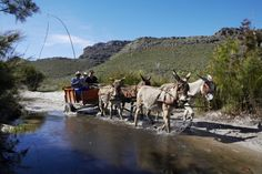 The Cederberg Heritage Trail offers slackpacking options in the Cederberg Mountain near the town of Clanwilliam, South Africa Provinces Of South Africa, Fishing Villages, Whale Watching, Small Towns, West Coast, Tourism, Trail, African, Activities