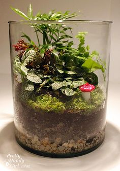 Learn to make the little red mushrooms in this terrarium