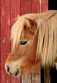 OH MY....THIS SO REMINDS ME OF OUR OLD OLD PONY, KING!!! WE HAD HIM FOR YEARS AND YEARS!!!!