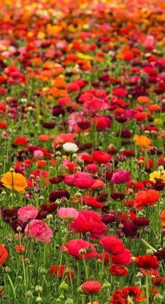 wildflowers.....