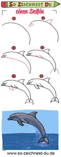 This is how you draw a dolphin - drawing Cute Animal Drawings, Bird Drawings, Easy Drawings, You Draw, How To Draw Hands, Gestion Administration, Dolphin Drawing, Cartoon Dolphin, Dolphins Animal