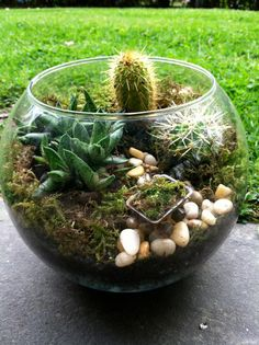 Glass Globe Cacti and Succulent Terrarium by mainlineterrariums, $32.00