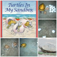 Turtles in my sandbox great for science class or summer fun. Great  hands on learning