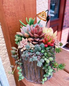 Succulents In Containers, Cacti And Succulents, Planting Succulents, Cactus Plants, Succulent Gardening, Succulent Terrarium, Container Gardening, Succulent Arrangements, Cactus Y Suculentas