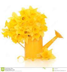 Резултат слика за daffodil