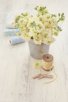 Ana Rosa - White Stalks in a` simple reprduction tin Pretty Pastel, White Flowers, Beautiful Flowers, Cream Flowers, Cream Wedding, Mellow Yellow, Floral Arrangements, Flower Arrangement, Wedding Flowers