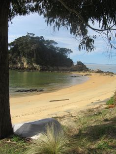 Little Kaiteriteri beach, South Island, New Zealand, the golden sand is millions of tiny crystals. Walking along the beach finding shells and beautiful clusters of crystals!!