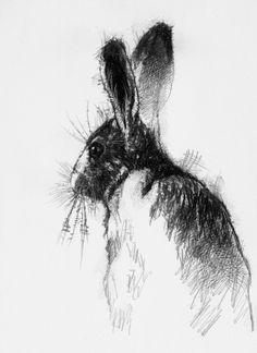 Lovely old brown hare sat pondering life I imagine, sketch © art, drawing, hare, Animal Sketches, Drawing Sketches, Contour Drawings, Drawing Faces, Drawing Tips, Rabbit Drawing, Rabbit Art, Bird Drawings, Animal Drawings