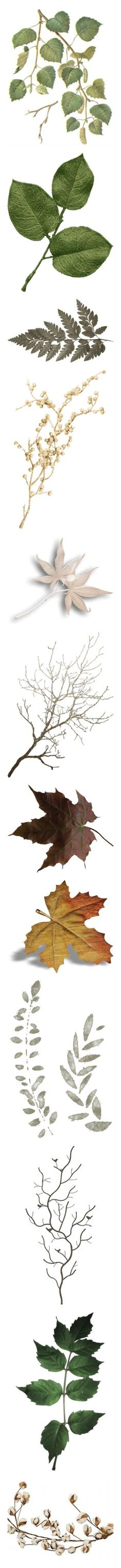 """~ Branches, Trees, Leaves, And Vines ~"" by romantiquechic ❤ liked on Polyvore featuring flowers, fillers, plants, nature, backgrounds, borders, picture frame, fillers - green, leaves and branch"
