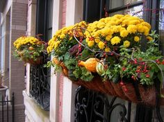 fall container flower ideas with photos - Yahoo Search Results