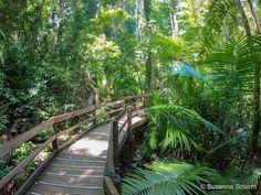 Daintree-Nationalpark Great Barrier Reef, Cairns, Rafting, Safari, Garden Bridge, Outdoor Structures, Travel, Tropical Rain Forest, Rare Plants