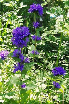 These top 10 perennials are among the best, most colorful, perennial garden plants. They grow in a wide range of conditions and have proven reliable for generations of gardeners.