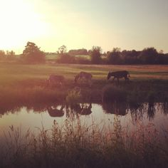 Oxford evening picnic with the Donkey's!