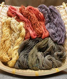 Mushroom dyes on wool: Dermocybe spp. (pink-orange), Omphalotus olivascens (purple, gray or green), Gymnopilus spp. (yellow)