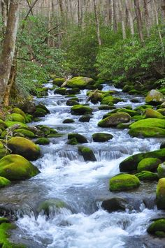 Take a dip in the rivers of the Smoky Mountains. Perfect mother nature's white noise.