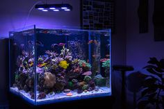 Reefkeeping in America's Heartland - OzarksReef Rimless Cube - Reef Central Online Community