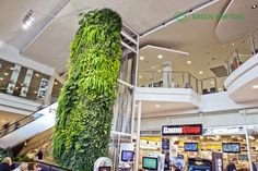 Green Fortune Plantwall / vertical garden in shopping mall / retail space.