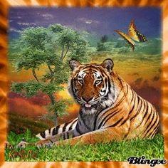 Blingee Tigers | Couchers soleil du groupe CS 2010-2012