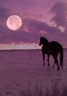 Full moon enjoyed by a horse on the beach