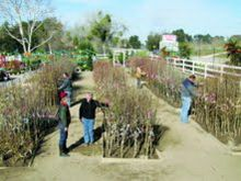 Bay Laurel Nursery Was Elished In The Early 1970s And Has Been A Valued Part Of