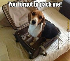 You forgot to pack me