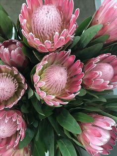 To grow proteas you need full sun and reasonable drainage. If you are looking for gardening ideas they produce stunning flowers and look great in pots and on a balcony. Protea Art, Protea Flower, Unusual Flowers, Pink Flowers, Beautiful Flowers, Australian Native Flowers, Arte Floral, Tropical Flowers, Trees To Plant