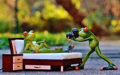 Fotograf, Frosch, Fotoshooting, Lustig, Kamera, Spaß