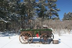 Picture of Old wooden wagon decorated for Christmas. Used as a Christmas card or non religious Holiday Card. stock photo, images and stock photography. Country Christmas Crafts, Old Fashion Christmas Tree, Primitive Christmas Decorating, Christmas Farm, Cowboy Christmas, Christmas Store, Christmas Scenes, Christmas Minis, Antique Christmas