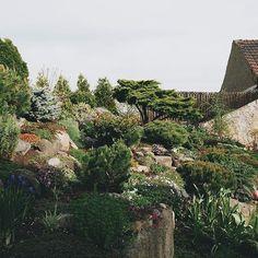 part of our rock garden