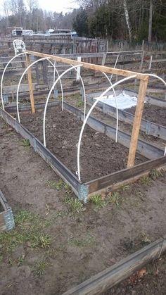 Jag är en kvinna på 48 år, här på min blogg tar jag upp allt angående min odling & bygge på mina kolonilotter och även balkongodling. Men även annat som intresserar mig. Bokashi, Garden Solutions, Planter Boxes, Raised Garden Beds, Garden Bridge, Garden Inspiration, Vegetable Garden, Allotment Plan, Gardening Tips