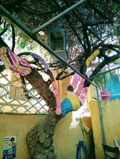 Drzewo życia 🌞 Egina