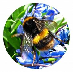 Bees are vital. Without them, pollination of crops doesn't occur. Bees work tirelessly to provide us with our food, but are struggling in the...