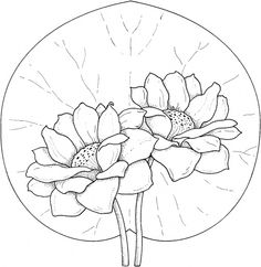 Two Water Lilies coloring page from Water lily category. Select from 25680 printable crafts of cartoons, nature, animals, Bible and many more. Super Coloring Pages, Free Printable Coloring Pages, Coloring Book Pages, Coloring Sheets, Line Drawing, Drawing Sketches, Art Drawings, Arte Popular, Water Lilies