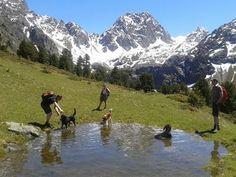 Wanderhotel Riederhof Wanderurlaub mit Hund in Österreich und Südtirol. #urlaubmithund