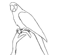 How To Draw A Parrot http://www.drawcentral.com/2012/05/how-to-draw-parrot.html?m=1
