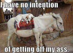 No intentions