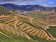 世界遺産 アルト・ドウロ・ワイン生産地域 アルト・ドウロ・ワイン生産地域の絶景写真画像 ポルトガル