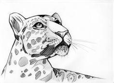 leopardo amur dibujos - Buscar con Google
