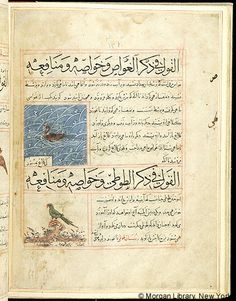 Bestiary, MS M.500 fol. 69v - Iran, Maragheh, 1297-1298 or 1299-1300, and 19th century - The Morgan Library & Museum