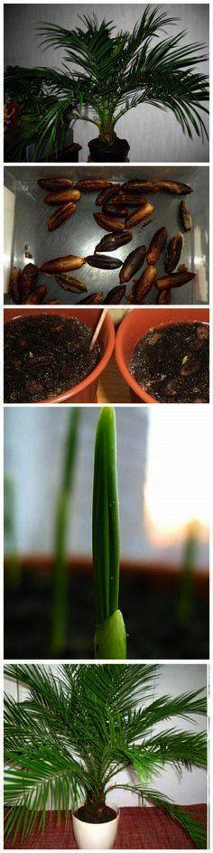 Indoor Garden Design Help (indoorgardendesignhelp) on Pinterest