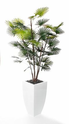 Artificial 5ft Finger Palm Tree (P003W) from Artplants.co.uk #palm #palmtree #artificialtree #artificialplant #houseplant