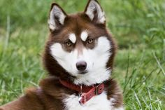 Самые красивые собаки в мире – парад достоинства, роскоши и умиления Смотри больше http://kot-pes.com/samye-krasivye-sobaki-v-mire-parad-dostoinstva-roskoshi-i-umileniya/