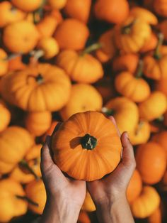 Halloween doesn't have to be a sugar rush & sacrifice to your well-being (or the planet's! These DIY Halloween treats are ones you will adore. Learn about all these zero waste halloween ideas here. Halloween Treats, Happy Halloween, Halloween Decorations, Fruit Decorations, Halloween Season, Handmade Decorations, Diy Halloween, Fall Hair Colors, Halloween Celebration
